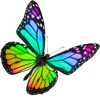 Clear Butterfly Real Rainbow Background Pictures to Pin on ...